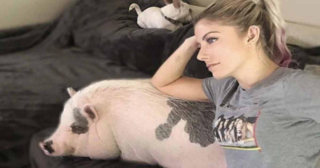 Fallecio el cerdo, Larry Steve, de Alexa Bliss